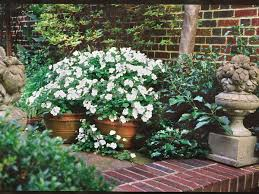 impatiens how to grow these annual flowers southern living
