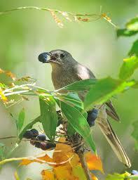 observations summaries 2012 golden gate audubon society