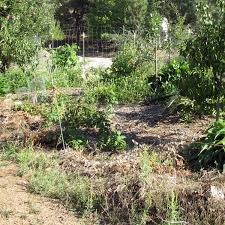 Permaculture Vegetable Garden Layout Permaculture Vegetable Garden Design Contemporary