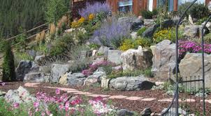 rocky hillside transformed into wildlife oasis the high country