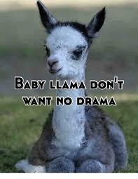 Llama Meme - drama llama meme llama best of the funny meme