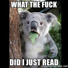 What The Fuck Did I Just Read Meme - what the fuck did i just read koala can t believe it meme
