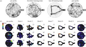 Dynamic Learning Maps Sharp Wave Ripple Network Oscillations And Learning Associated