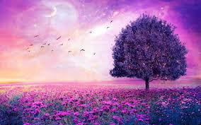 purple tree wallpapers wallpaper cave