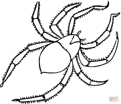 spider 24 coloring page free printable coloring pages