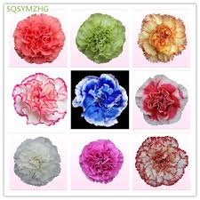 carnation flowers 25 kinds of s day carnation flowers 100pc carnation