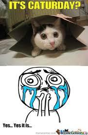 Kat Meme - kit kat by super pug meme center