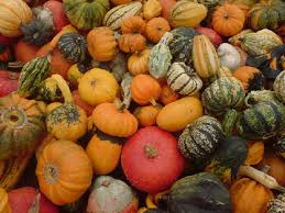 small pumpkins small pumpkins in germany by thmsfrst it s the great pumpkin