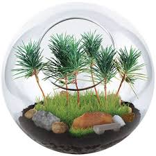 park in a bottle terrarium in trending plants gardening gifts