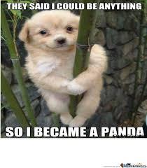 Funny Panda Memes - funny panda dog by paerlgem meme center