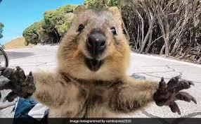 imagenes animales australia the world s happiest animal lives in australia see pics