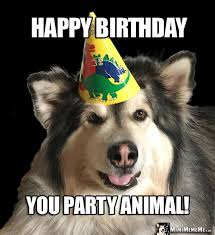 Funny Animal Birthday Memes - handsome dog in party hat says happy birthday you party animal