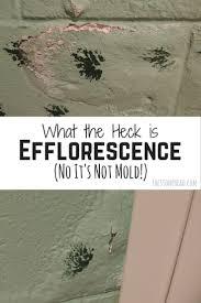 basement wall efflorescence treatment prevention u0026 your health