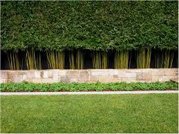 backyards bright landscape design bamboo irrigation blg