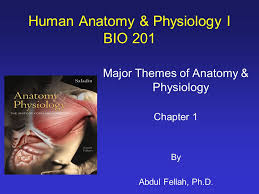 Images Of Human Anatomy And Physiology Human Anatomy U0026 Physiology I Bio Ppt Video Online Download