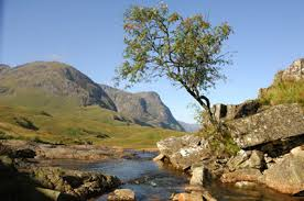 rowan mountain ash tree all about rowan mountain ash trees