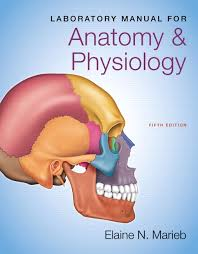 Human Anatomy And Physiology Study Guide Pdf Marieb U0026 Hoehn Anatomy U0026 Physiology Plus Masteringa U0026p With Etext