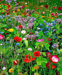 245 best wildflowers images on pinterest landscapes nature and