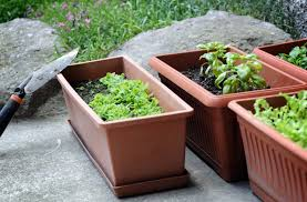 container gardening small space and container gardening foreman u0027s general store