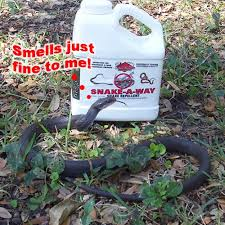 Snake Holes In Backyard Snake Repellent Does It Work