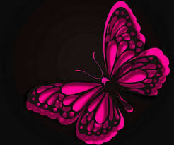 black and pink butterfly wallpaper a wallpaper com