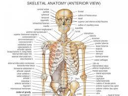 Google Body Anatomy Bone Chart Human Body Anatomy Of The Human Body Bones Full Body