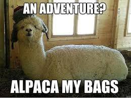 Animal Pun Meme - 15 animal puns ewe can t live without