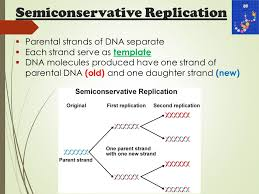 do now what is replication where does this take place