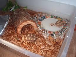 Tortoise Bedding My New Pet Sulcata Tortoise Forum