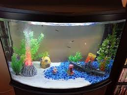 Aquascape Fish Half Gravel Half Sand Two Colours Fish Tanks Pinterest