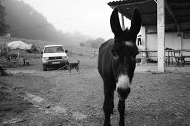 the story of lyka the donkey paradise