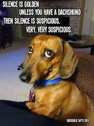Orange Dog Meme - dachshund dog silence golden meme brilliant blue pinterest