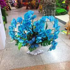 Blue Orchids Aliexpress Com Buy Rare Orchid Bonsai Balcony Flower Blue