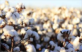 usda customer help desk united states of america global cotton consumption to reach record