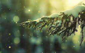 fir branch in snow desktop backgrounds 4237146 1600x1000 all