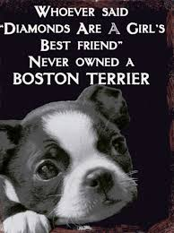 Crazy Dog Lady Meme - boston terriers are more precious and more valuable than diamonds