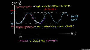 glucose insulin and diabetes video khan academy
