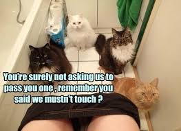 Meme Toilet - lolcats toilet lol at funny cat memes funny cat pictures with