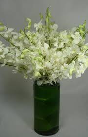 white dendrobium orchids white dendrobium orchids