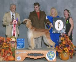 afghan hound national 2014 jolie afghan hounds news