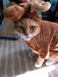 Halloween Costumes Cats 25 Cat Costumes Halloween Halloween Costumes Costumes Cat