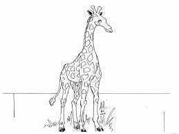 giraffe coloring pages printable or activity pig pig coloring sheet coloring page create a printout