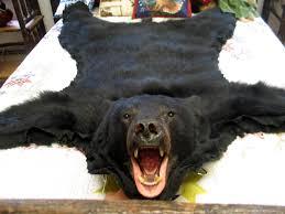 bear skin rugs home med art home design posters