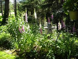 Growing Zone Map The Northern New York Gardener Where Did My Foxgloves Go Over