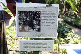 Dr Gehrke Baden Baden Casa Azul In Coyoacán U2013 Ein Besuch Bei Frida Kahlo Chicca
