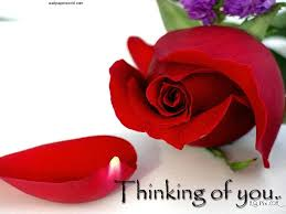 flower red flowers love beautiful rose flower wallpapers