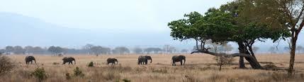protecting elephants in tanzania international