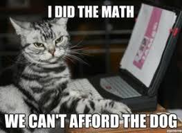 Lol Cat Meme - the transitional nature of cat based memes to dog based memes god