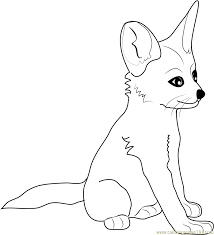 fennec fox baby coloring free fox coloring pages