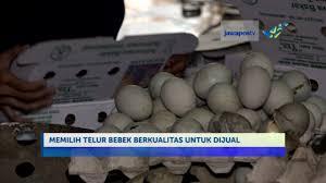 membuat telur asin berkualitas sisi lain oleh oleh telur asin khas brebes youtube